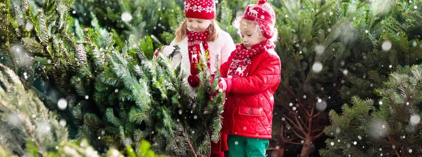 Two young girls in red fairaisle scarfs and hats picking out the perfect pine tree.