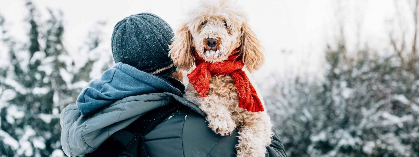 Man holding cute puddle dog with red scarf in a snowy wooded area.
