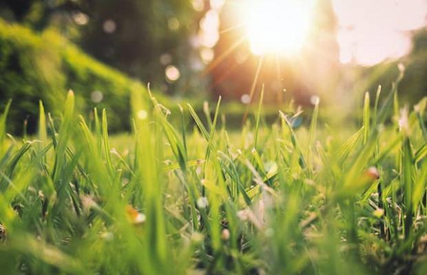 grass with sunshine